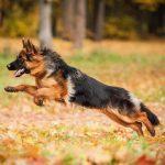 Spreekbeurt Honden