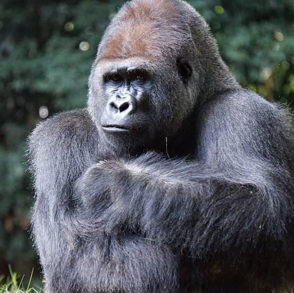 Spreekbeurt Primaten
