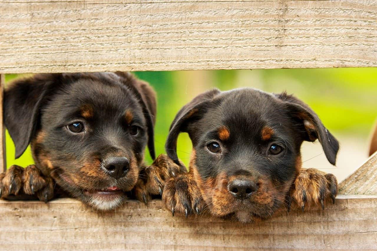 Waar komen honden vandaan