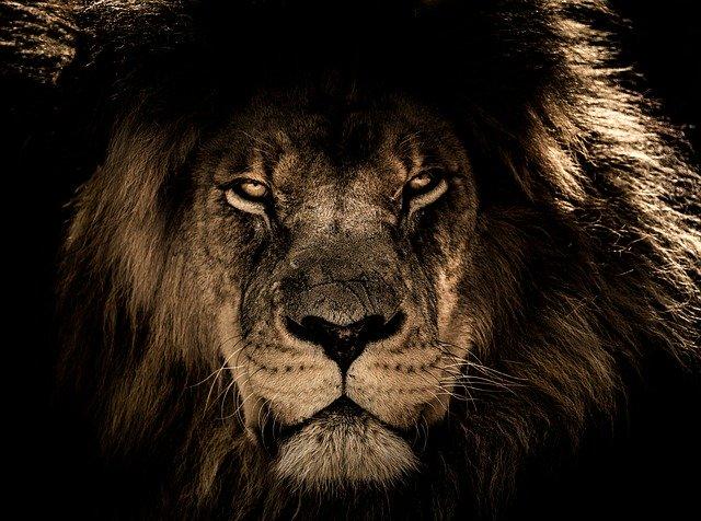 De uitgemergelde leeuwen uit Soedan
