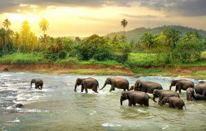 Hoe groot wordt een olifant