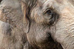 Hoe slim is een olifant