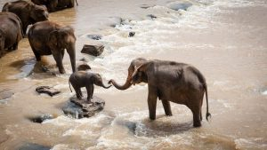 Hoeveel olifanten zijn er op de wereld