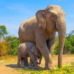 Spreekbeurt olifanten
