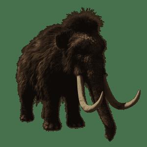 Wie zijn de voorouders van de olifant
