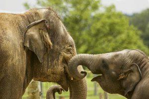 Zijn olifanten sociale dieren