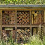 Nieuwe bijensoorten in Nederland gesignaleerd