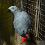 Vloeken in de dierentuin Niet in Engeland