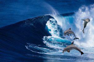 Waarom springen dolfijnen?