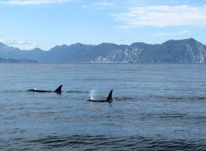Waar leven dolfijnen?