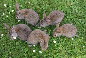 spreekbeurt konijn