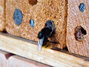 Hoe planten bijen zich voort