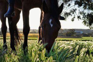 Wat eten paarden