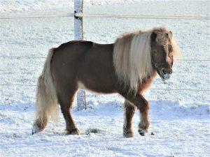 Wat is het verschil tussen een paard en een pony