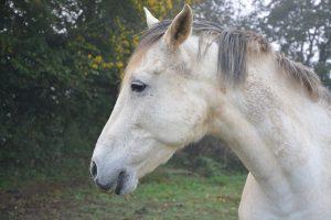 Wie is de vijand van een paard