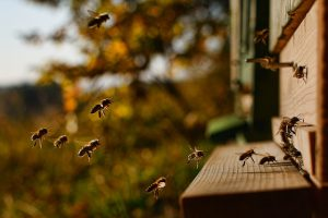 hoe zijn de taken verdeeld in de bijenkorf