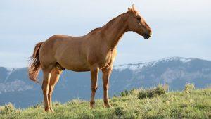 paardenspreekbeurt