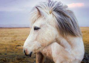 Waar leven paarden