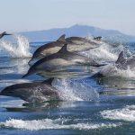 Dolfijnen Dolfijn