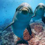 Dolfijnen Dolfijnen