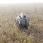 Meer neushoorns in Nepal