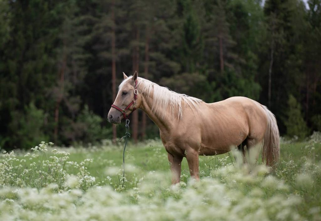 Paard Paarden