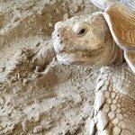 Schildpadden 20190621_125921