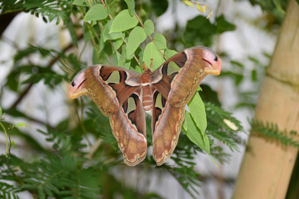 Vlinders DSC_0006