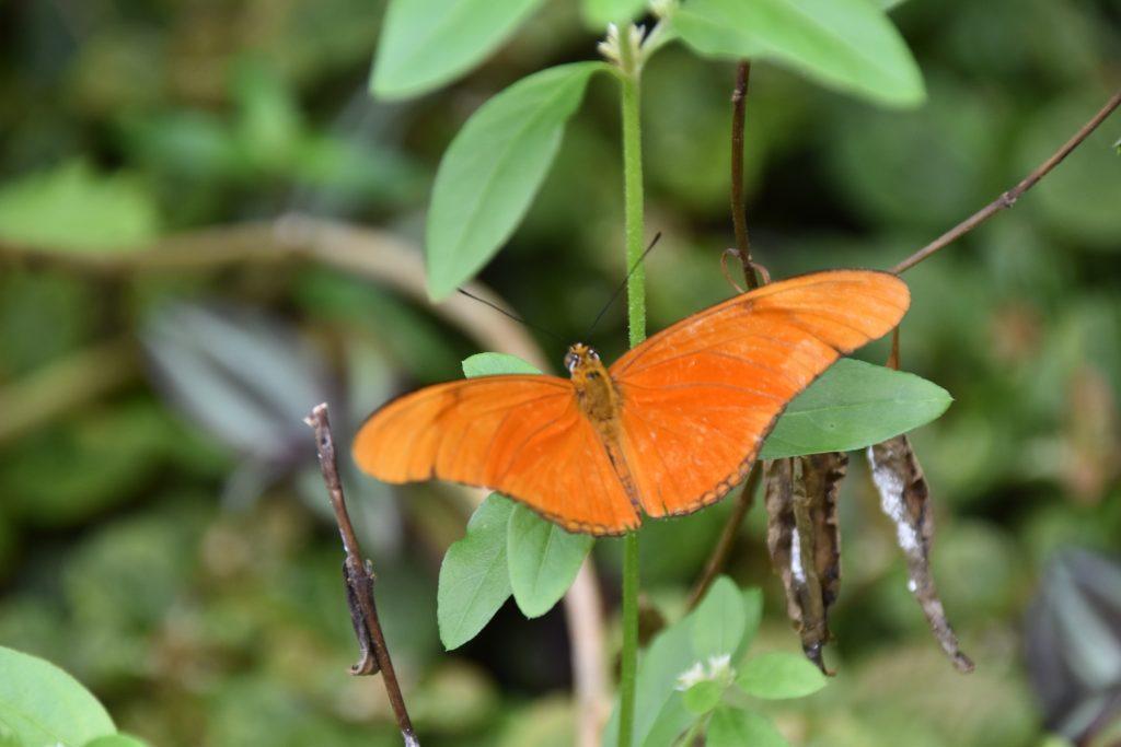 Vlinders DSC_0048