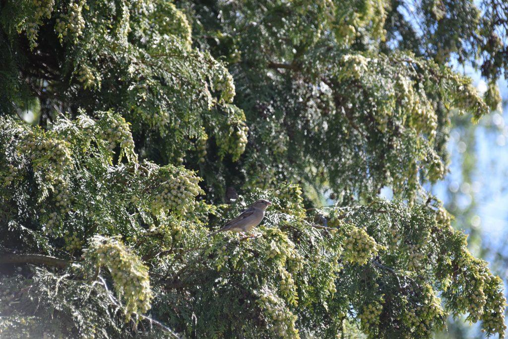 Vogels DSC_0365