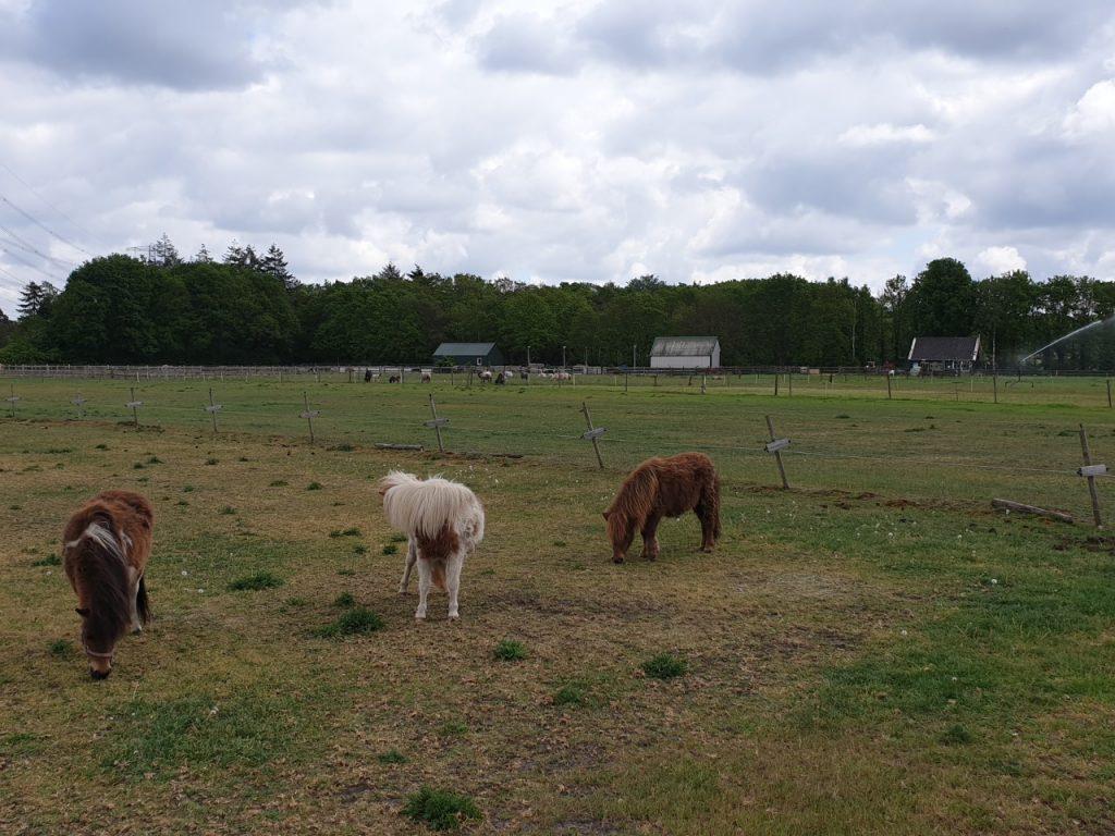 Paardachtigen paardenweide