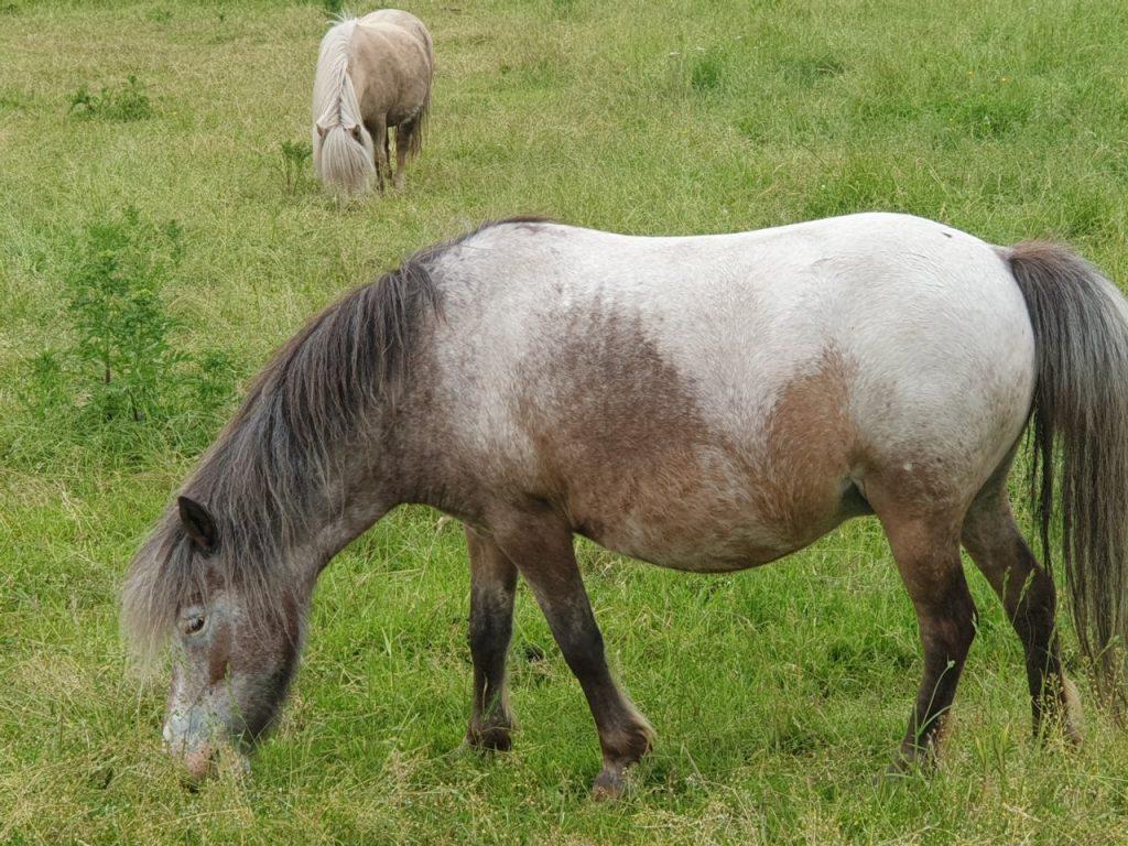 Hoefdieren paardje