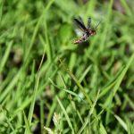 Insecten vliegende