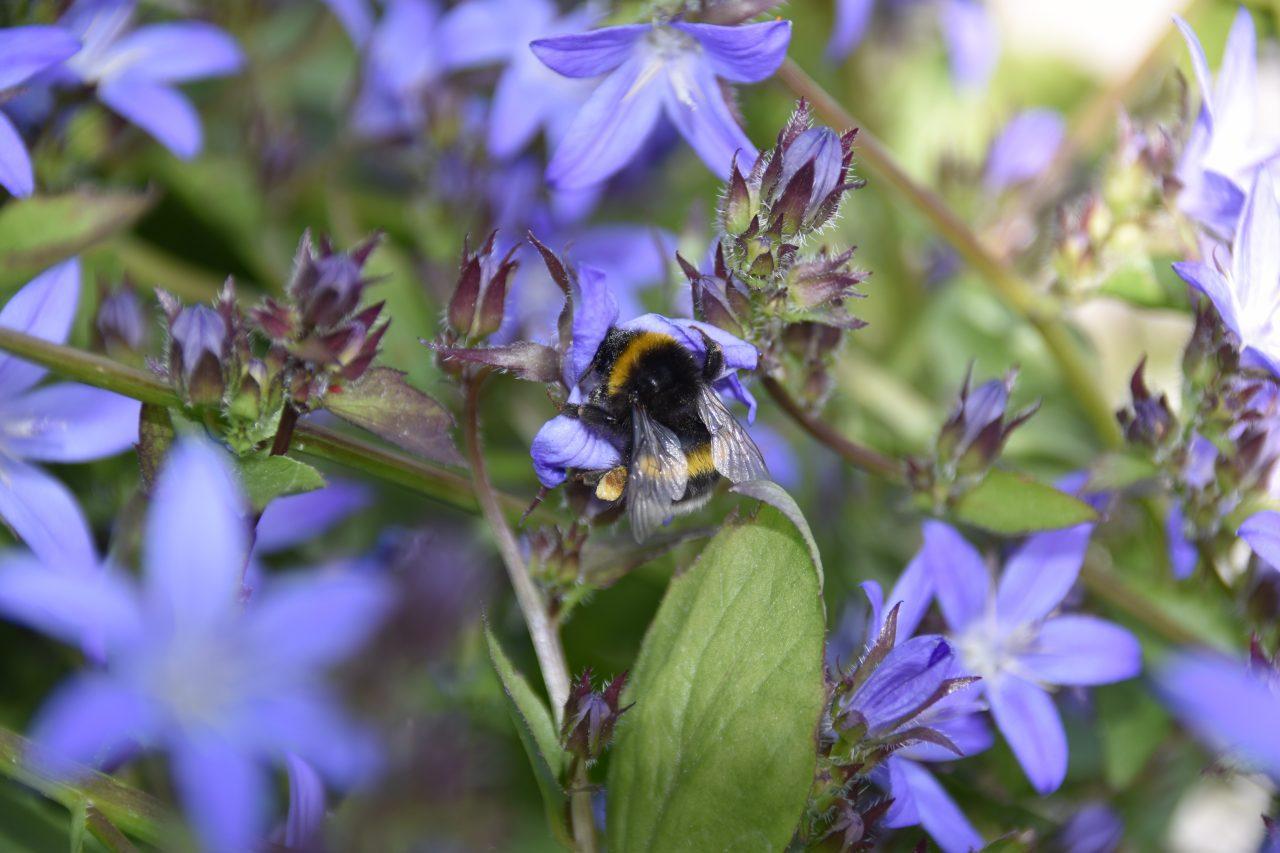 Bijen Bestuiving