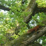 Eekhoorns Eekhoorns