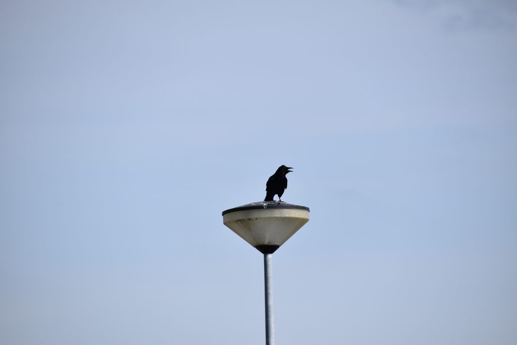 Vogels Specht