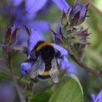Bijen Vleugels
