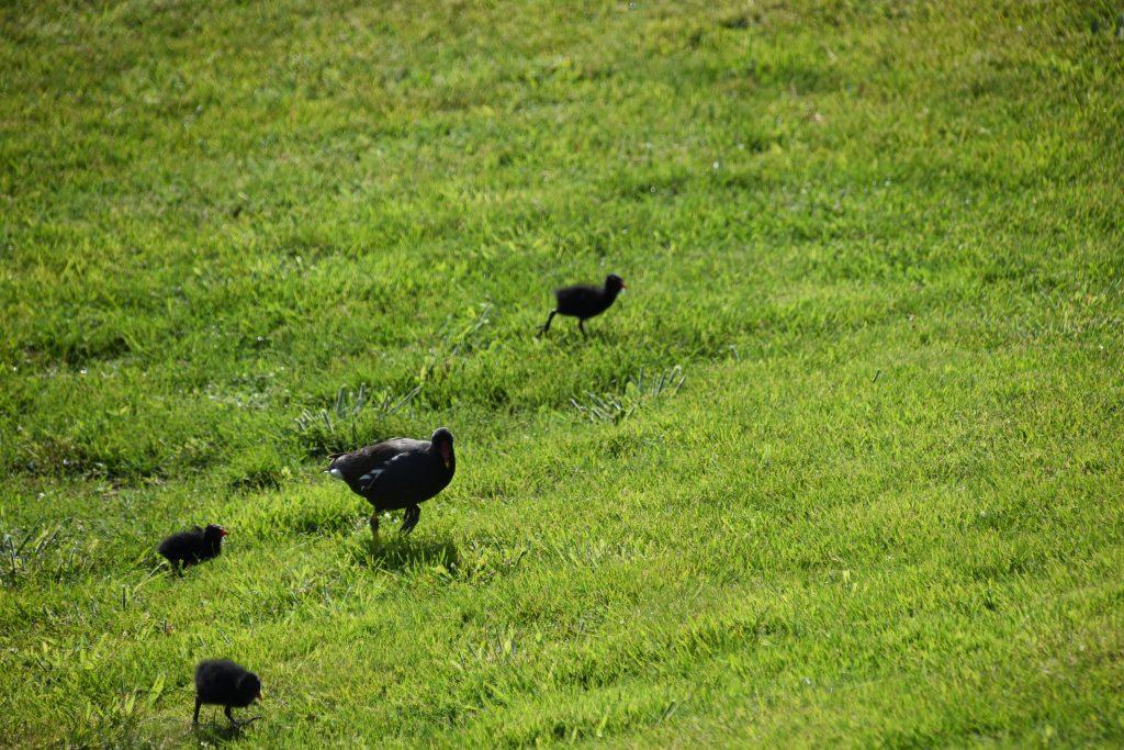Vogels dieren