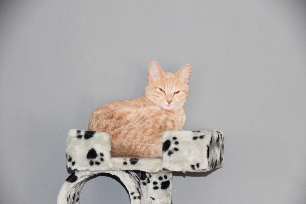 Zoogdieren kater