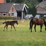 Paard klein