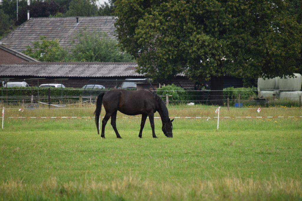 Paard weiland