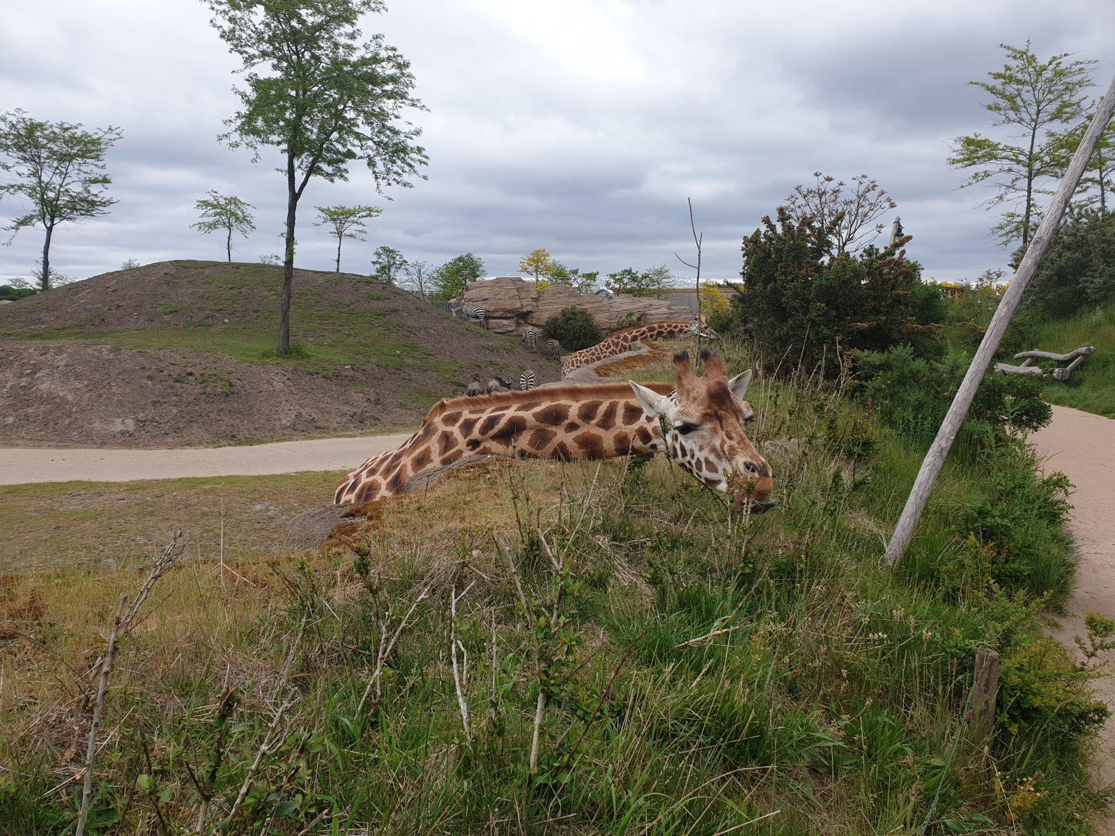 Giraf Wildlands