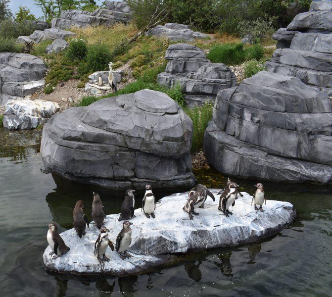 Pinguins wildlands