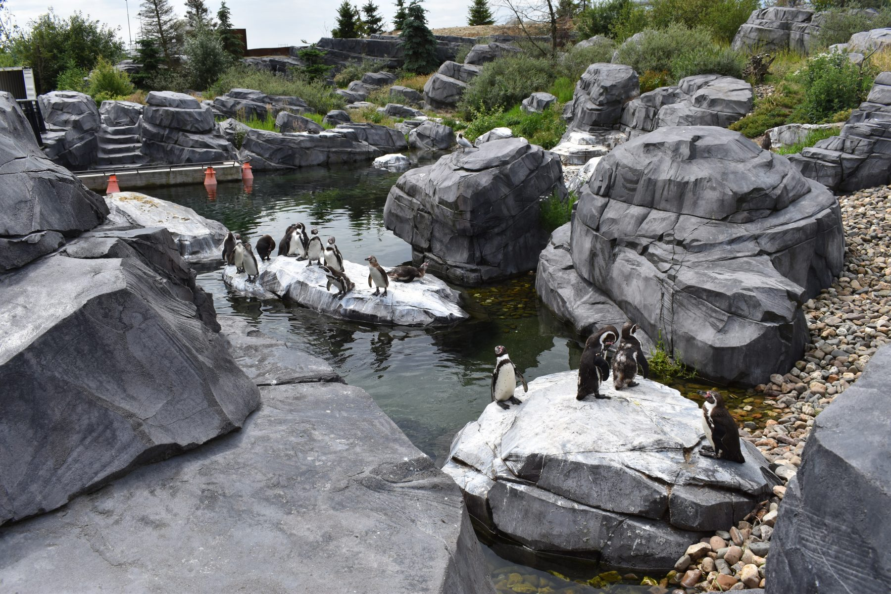 Humboldtpinguin zoo
