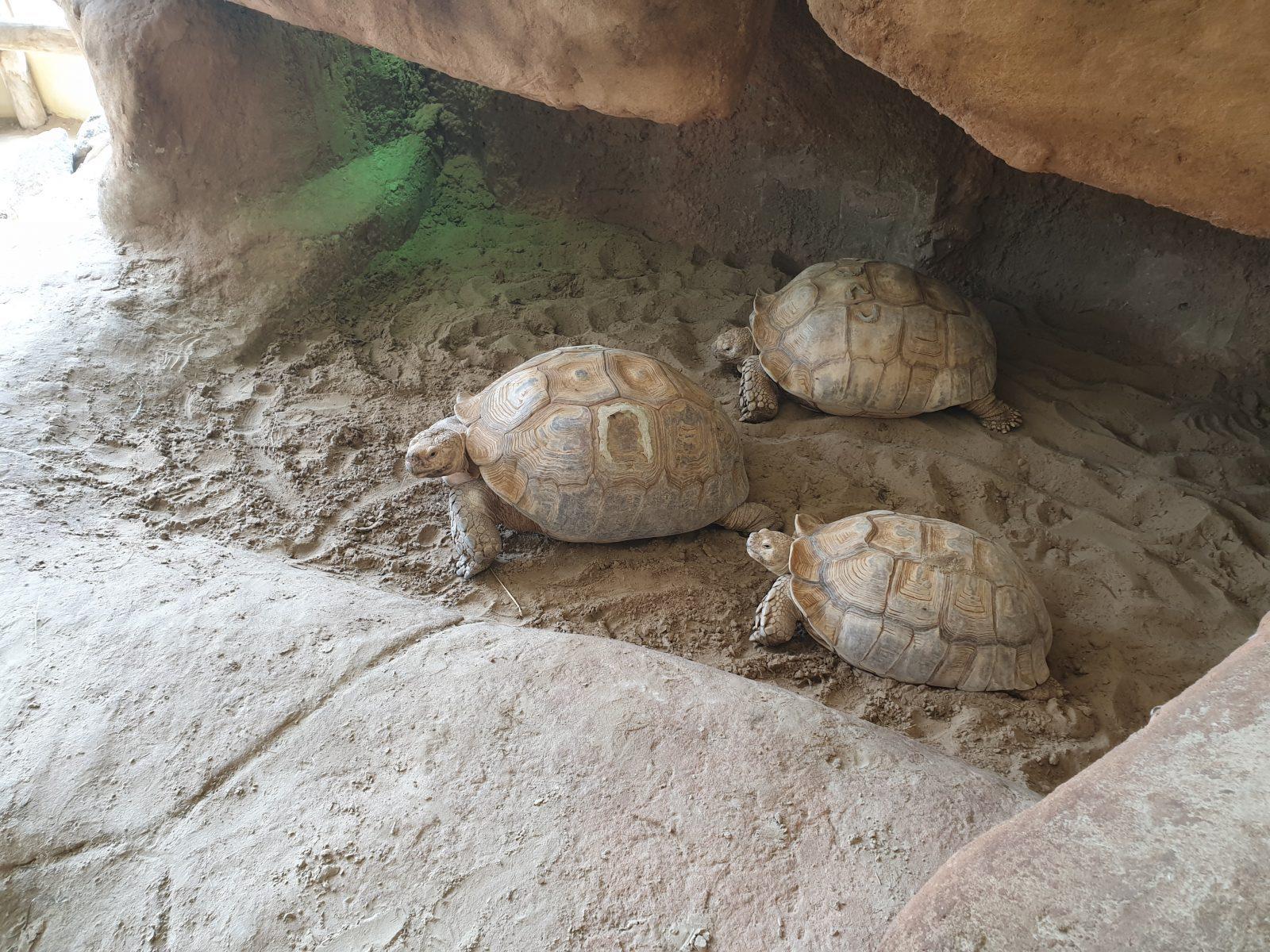 sporenschildpadden wildlands
