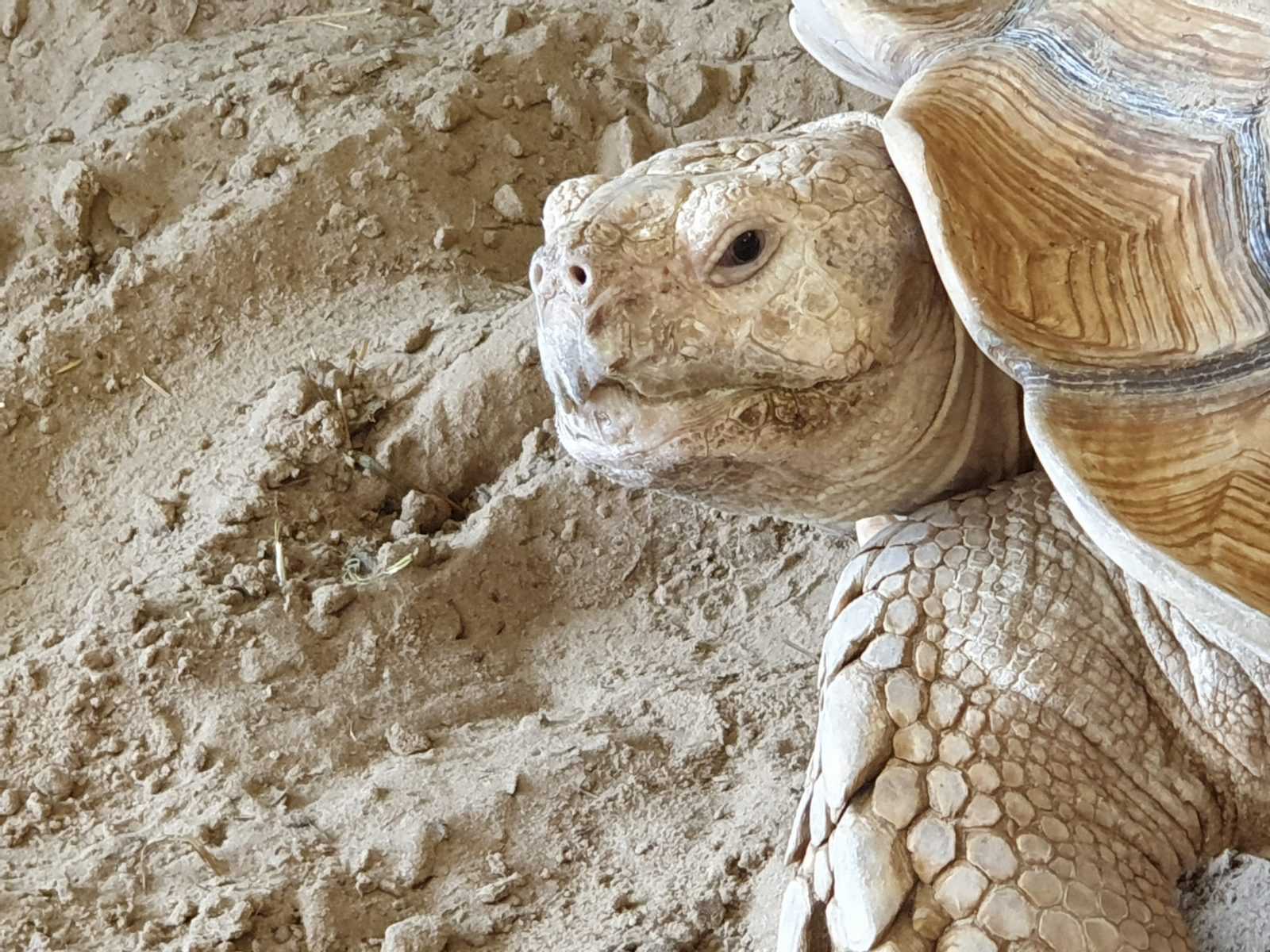 Hoofd schildpad
