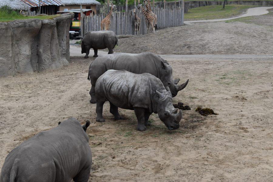 neushoorn dierentuin