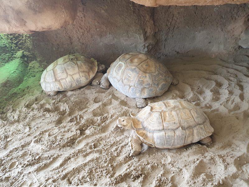 schildpadden gevangenschap
