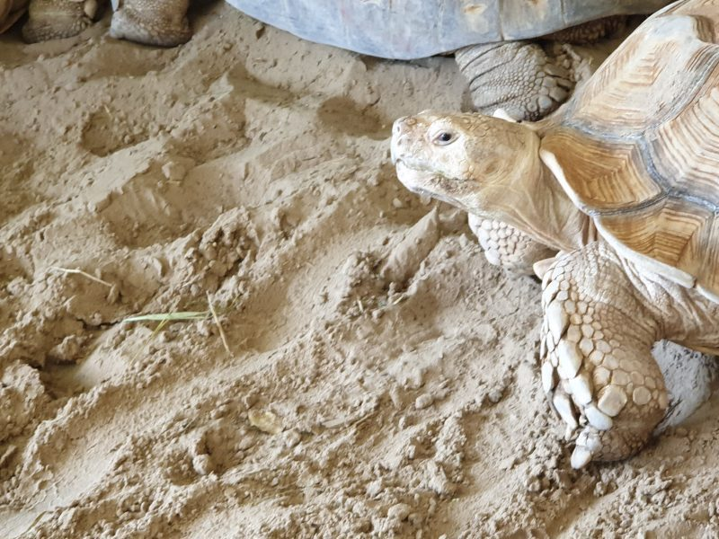 schildpad dierentuin