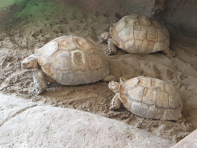 sporenschildpadden